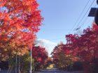 秋の山梨県ドライブでみた紅葉